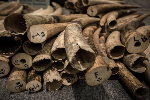 US Posts $1 Million Reward Targeting Laos Poaching Ring