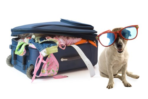 How to Travel With Your Pet Laos