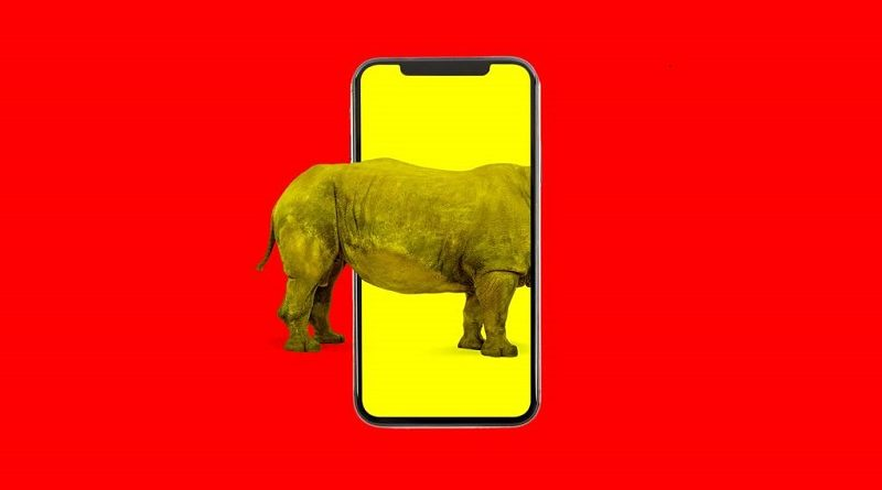 How China's WeChat became a grim heart of illegal animal trading