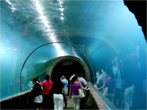 Nong Khai's Aquarium - A Closup look At The Mekong River Fish