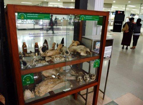 Laos Implicated in High-Value Illegal Wildlife Seizures
