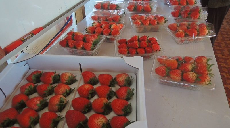 Pakxong Strawberry Farm Has Tasty Treats In Store
