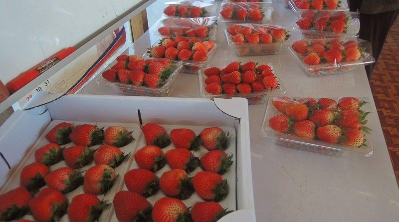 Pakxong Strawberry Farm Has Tasty Treats In Store