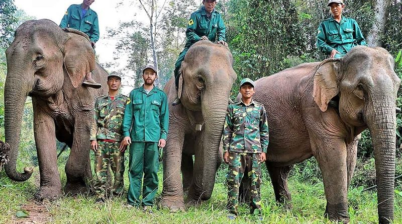 Crazier than Fiction- the Elephant Rangers of Laos